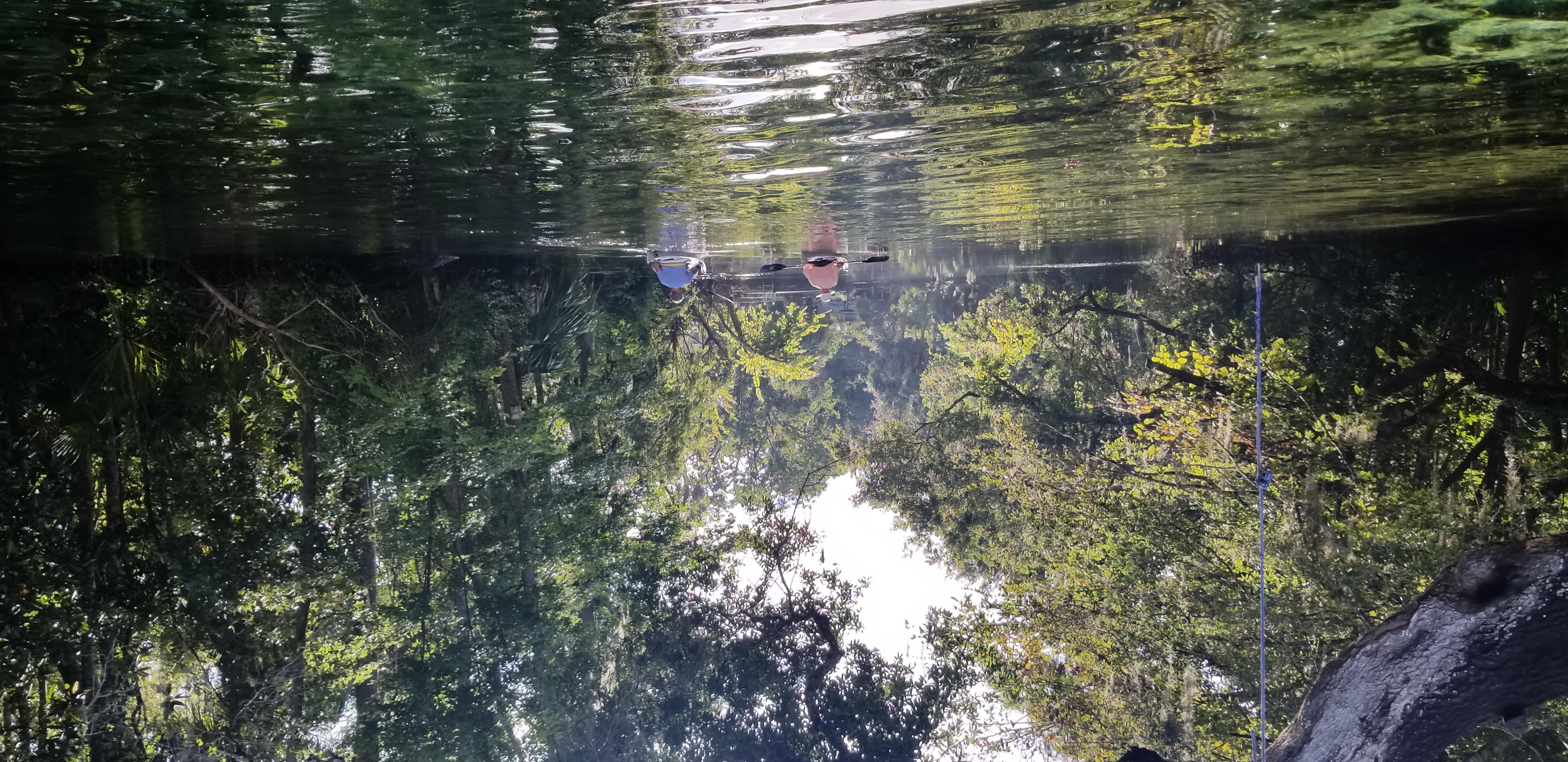 Springs Coast Guided Kayaking Tours FL