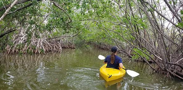Kayaking Tours Cocoa Beach FL, Mangrove