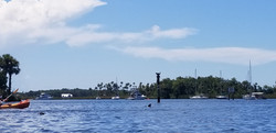 Guided Kayaking Tours Manatees Dolphin,