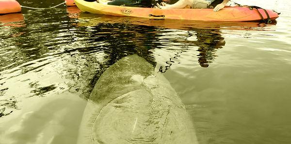 Manatee Kayaking Tours, Space Coast, Coc
