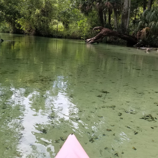 Kayaking Tours in Florida Springs