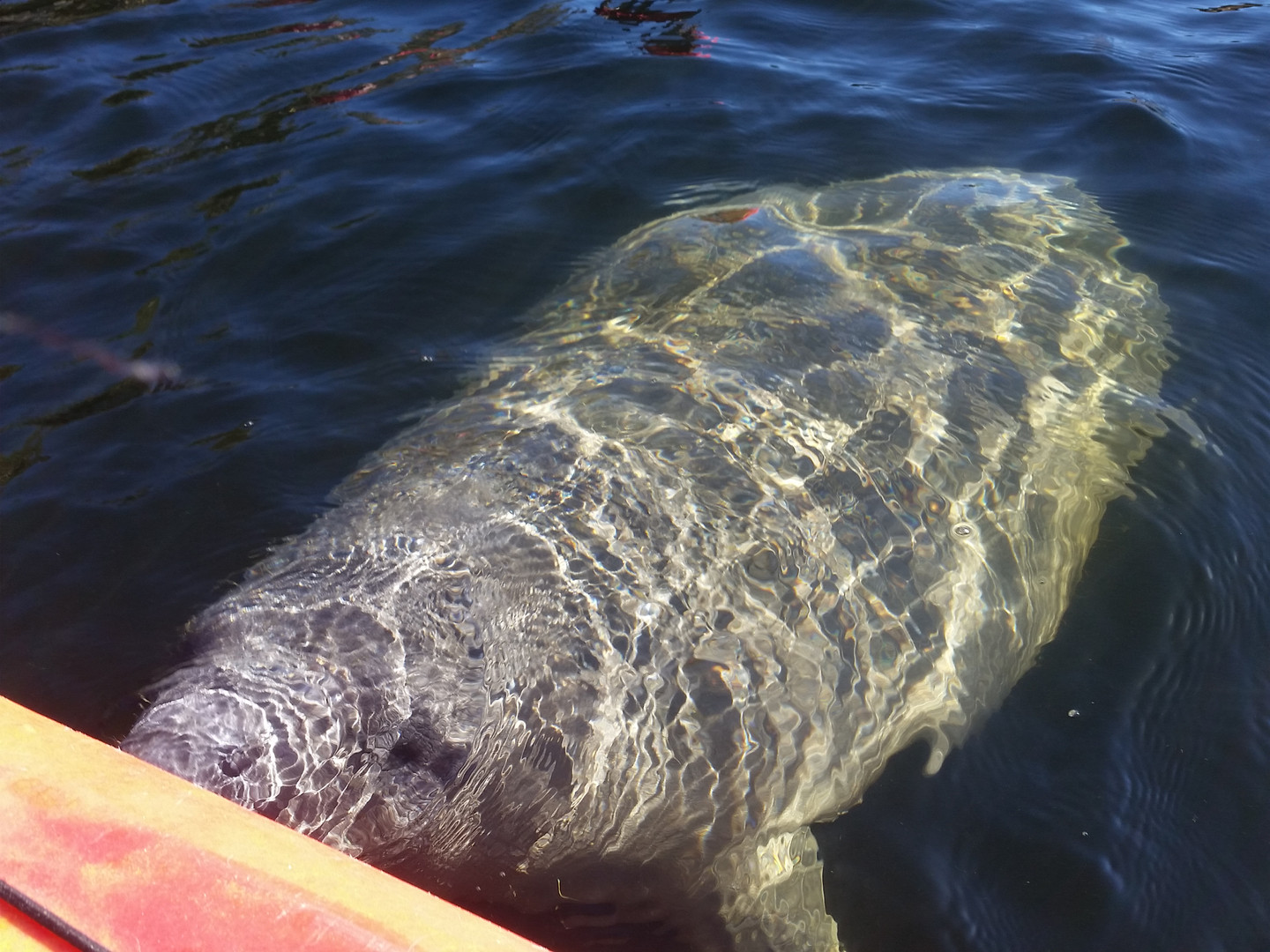 manatee tours, kayak tours, central flor