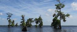 blue-lake-cypress-kayaking-tour