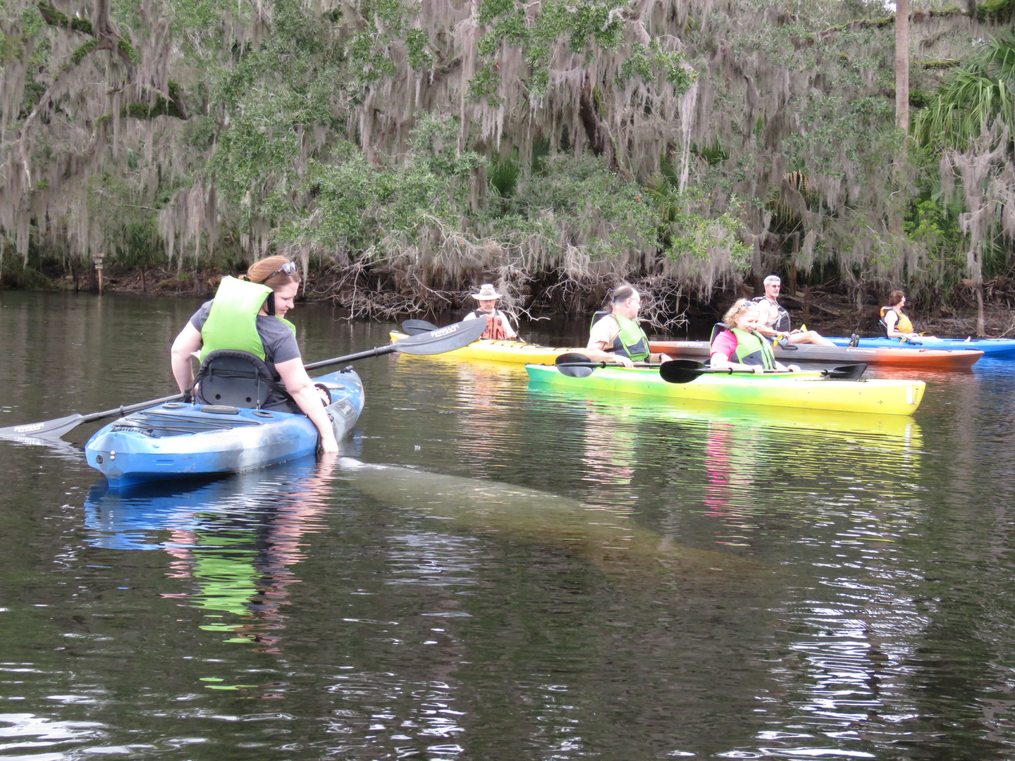 Kayak with Manatees at Blue Springs, Ora