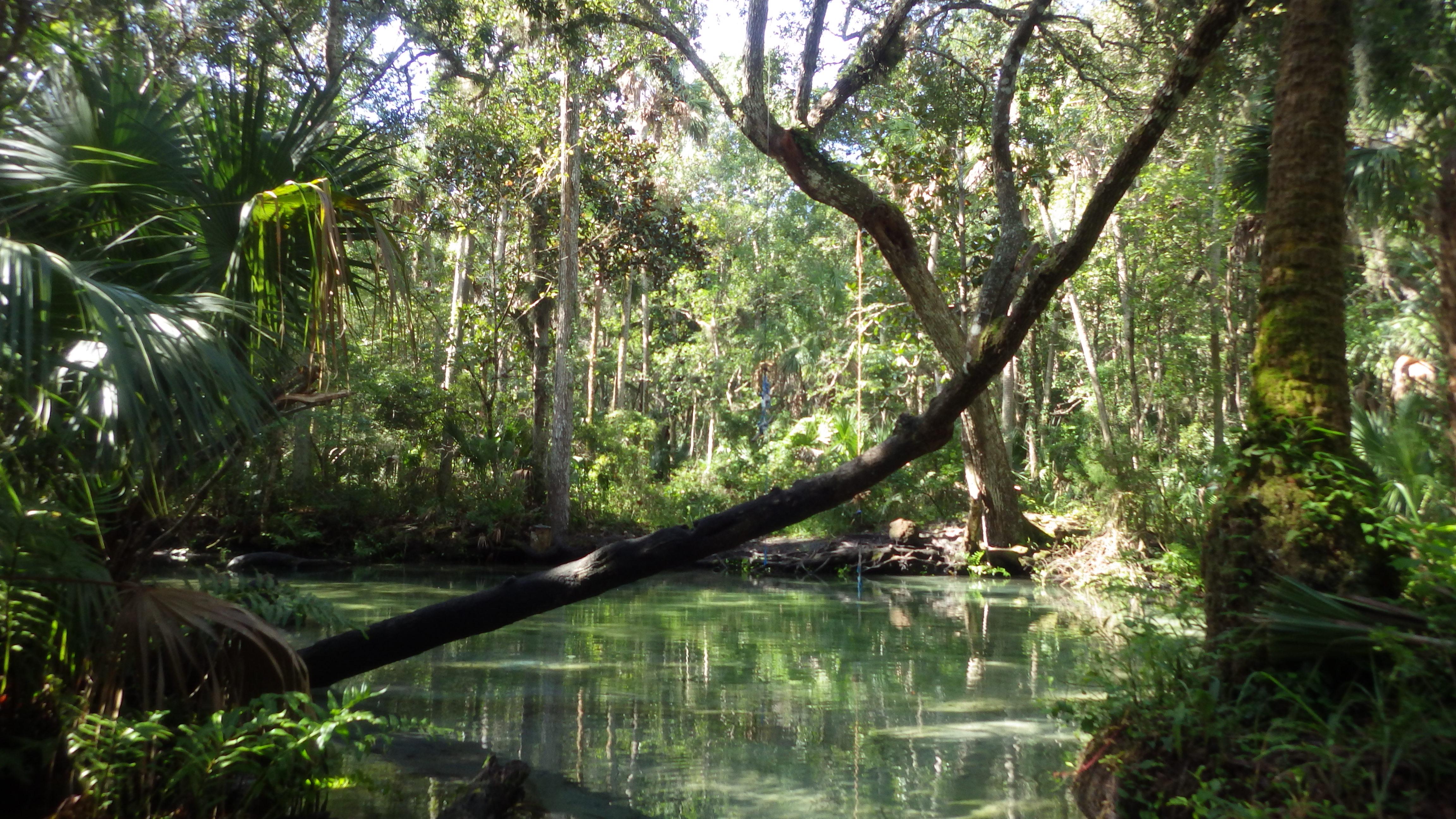 Guided Kayaking Tours in FL, Florida