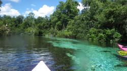 Kayaking Tours in Florida Springs