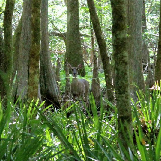 Florida State Park, Guided Tours, Nature