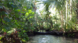 The Crack at Chassahowitzka Springs, Fre
