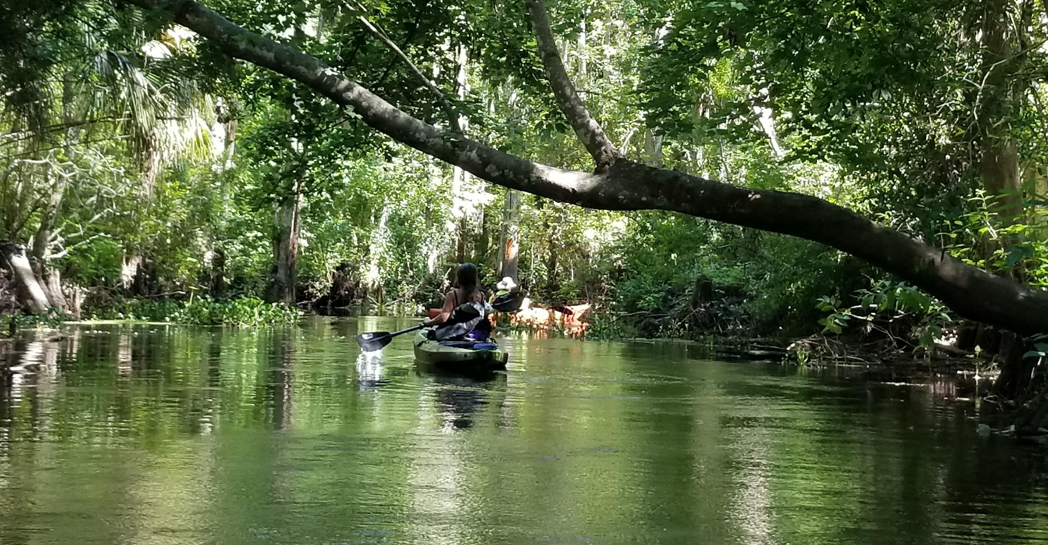 florida kayaking adventures, tours, eco-