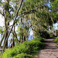 Lake Hancock _ Alligator Alley trail_ at