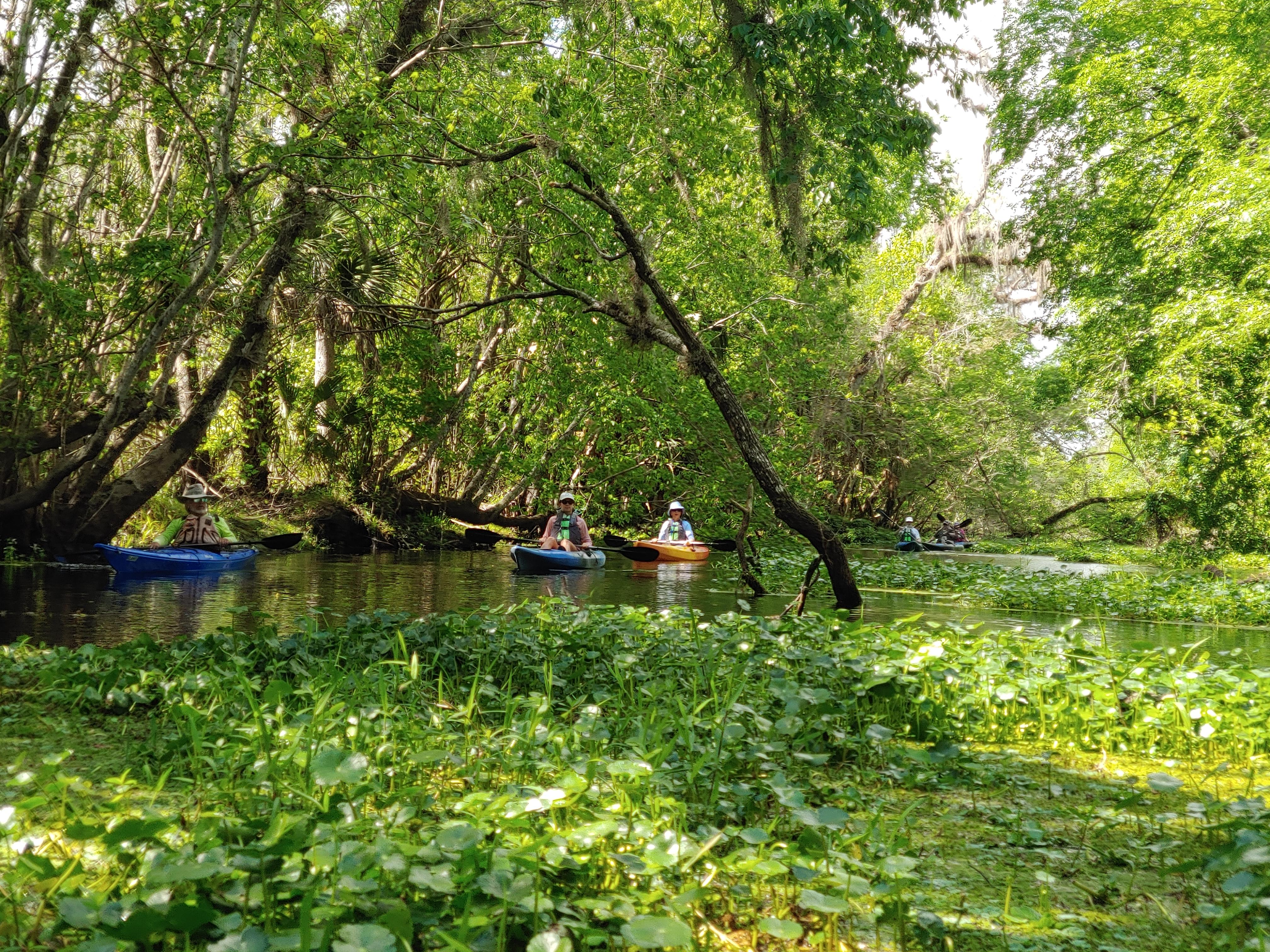 Florida Kayaking Tours, Wildlife, Alligators, Blue Spring, Snake Creek