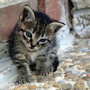 איך לשמור על חתולים בחורף