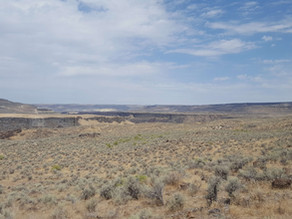 Sagebrush: the Ever-present Plant of the Owyhee