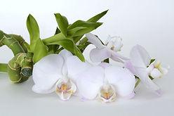 orchid-2115258_1920.jpg