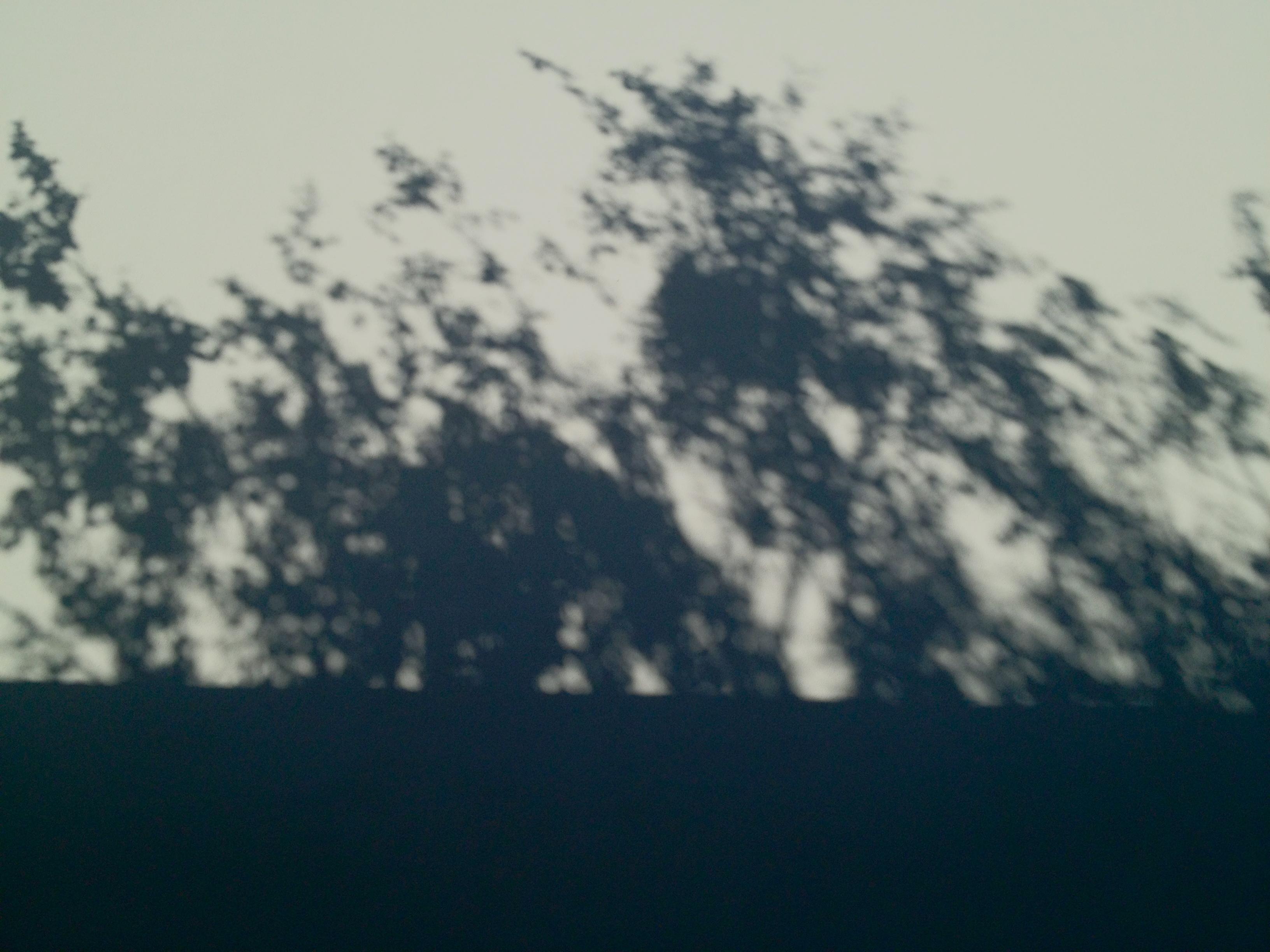 ana_rocha_sousa_3.jpg