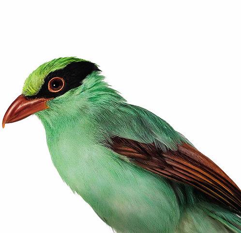 Aves Pequeñas