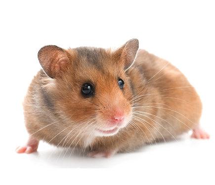 Hamsters & Jerbos