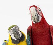 Aves Grandes