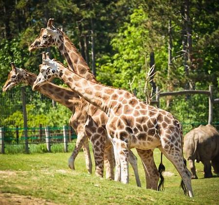 Veszprém_Zoo.jpg