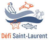 SSL_DSL_Logo_RGB (1).png