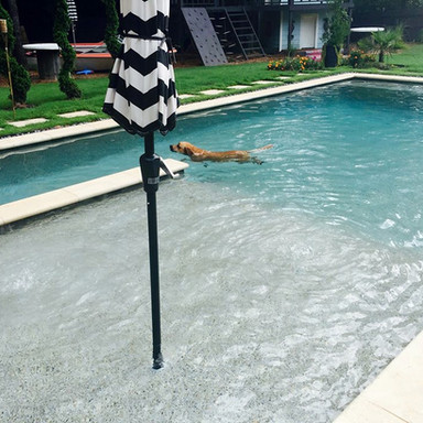 Dogs love swimming pools too!