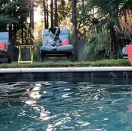 dog relaxing backyard swimming pool