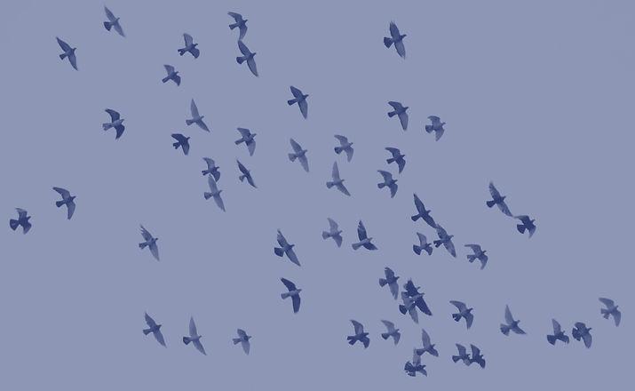 Flying birds_edited.jpg