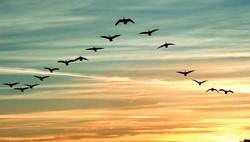 migrating-birds-1-e1537696729874_edited_edited.jpg