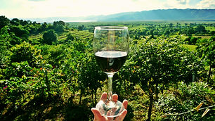 a glass of wine - vineyard background - vineyard - vines - hand holding a glass of wine