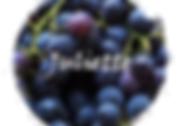 Juliette Logo Webs.png