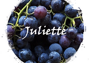 juliette wine logo - grapes - dark grapes