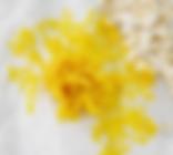Physarum Polycephalum / BLOB