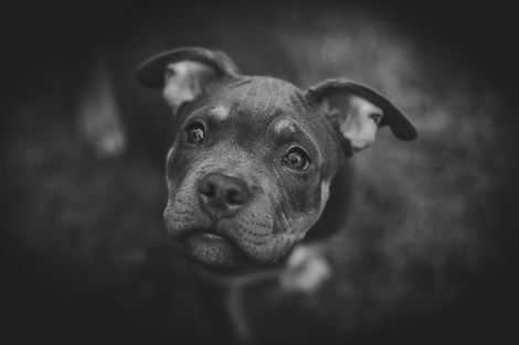 Dog Portrait_edited.jpg