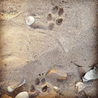 Earth Native Coyote weekly program stude