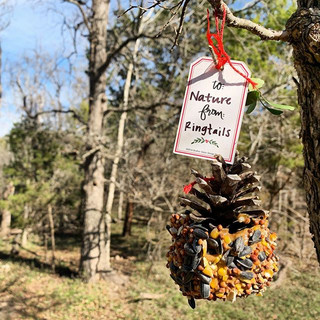 Holiday nature crafts from our lovely Ri