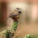 bird-680147_640.jpg