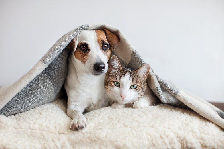 Dog and cat together. Dog hugs a cat und
