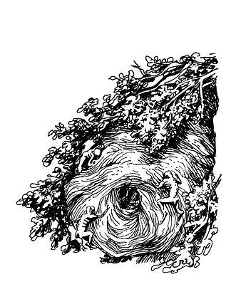 Crinwin Nest