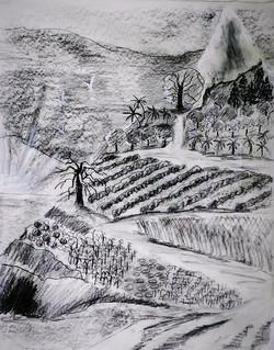 Value Drawing Mount Eden