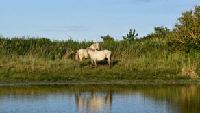 La riserva di Boscoforte. Un felice incontro tra acque, flora e fauna