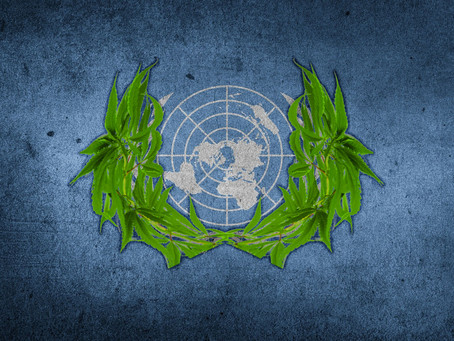 UN passes Vote on Cannabis, recognizes its Medical Potential