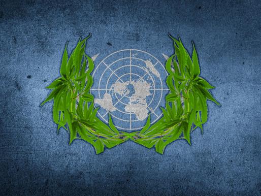 UN passes Vote on Cannabis, recognizes its Medical Potential