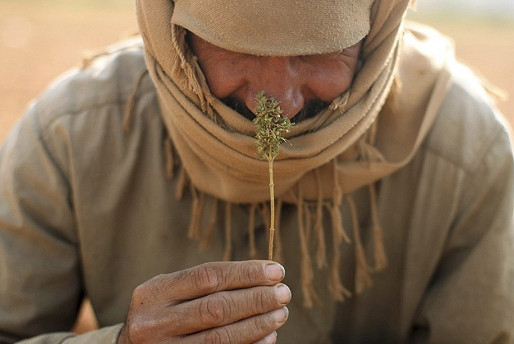 Cannabis in Himalayas - Major Economic Source to Illegal and Taboo Substance