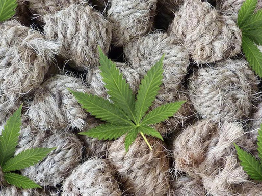 Hemp Fibre, Hemp Composites and Their Applications