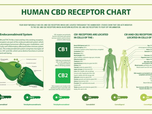 Chapter 5 - Cannabis, Immune System, and Corona Virus (Vijaya Charita with Vikramm Mitra)