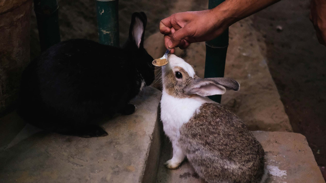 animal-fodder-1.jpg