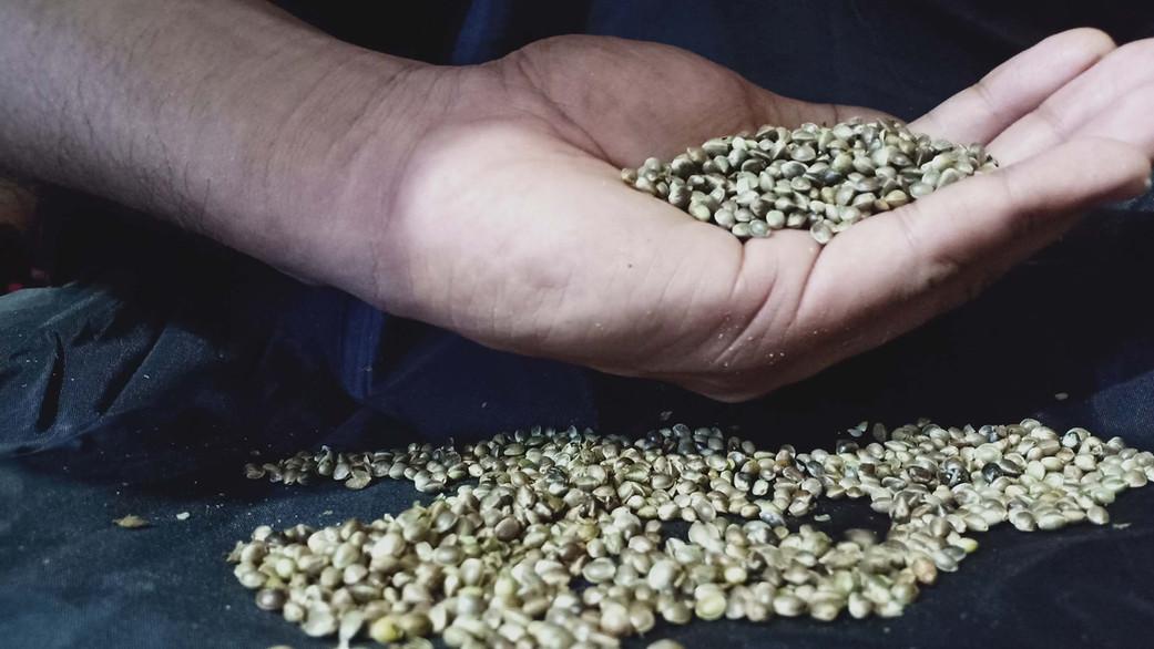 hemp-seeds-1.jpg