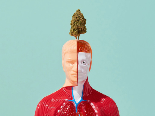 How Cannabis affects our Body?