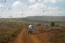 Locust_1.jpg