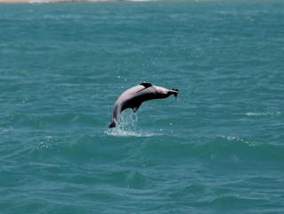 UFRN pesquisa comportamento acústico de golfinhos no litoral do RN